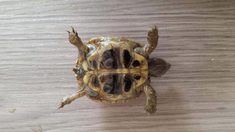 Identification de 2 bébés tortues  20150915