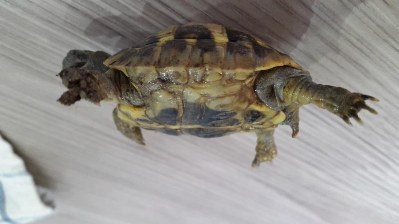 Identification de 2 bébés tortues  20150917
