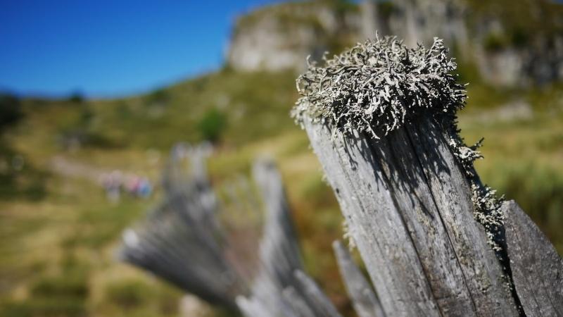Balades dans le Cantal P1080212