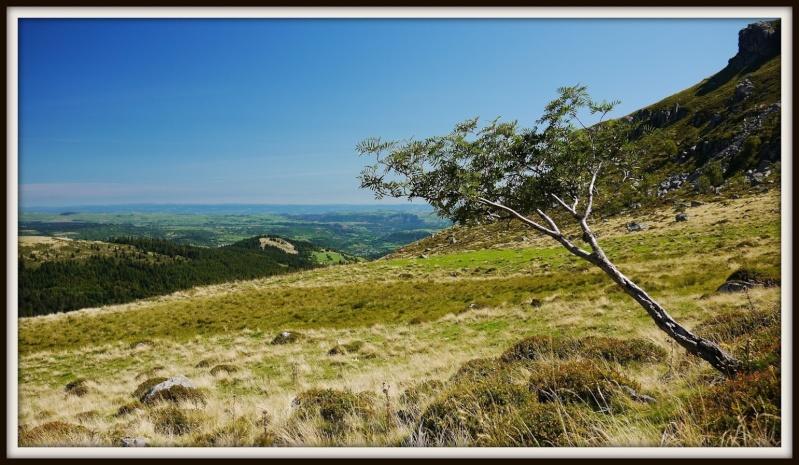 Balades dans le Cantal P1080214