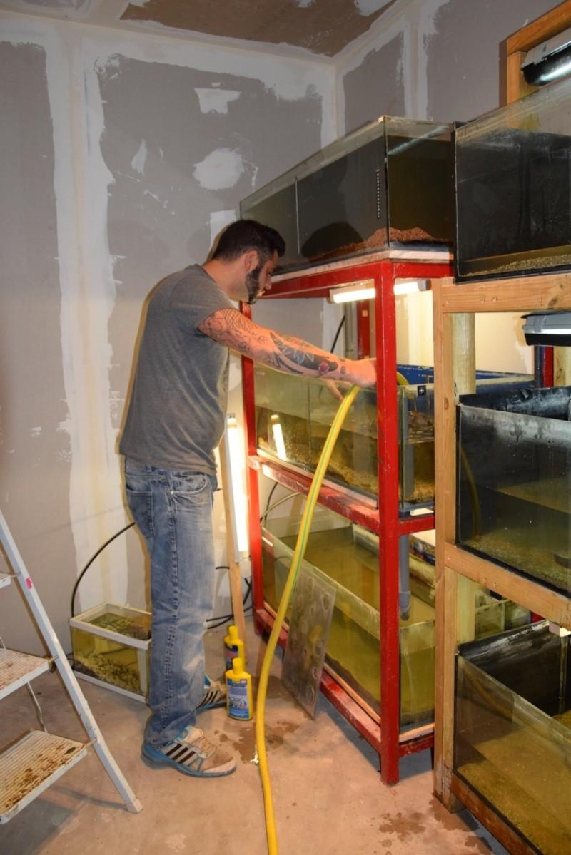 installation fishroom  Dsc_0710