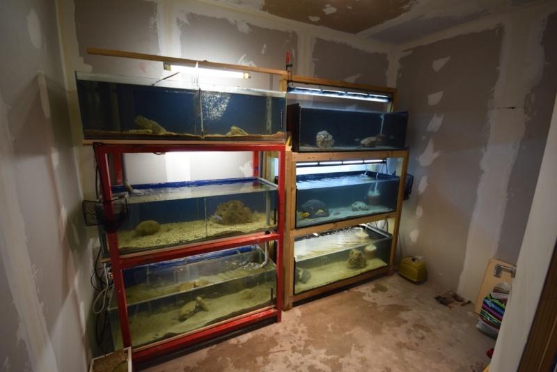 installation fishroom  Dsc_0713