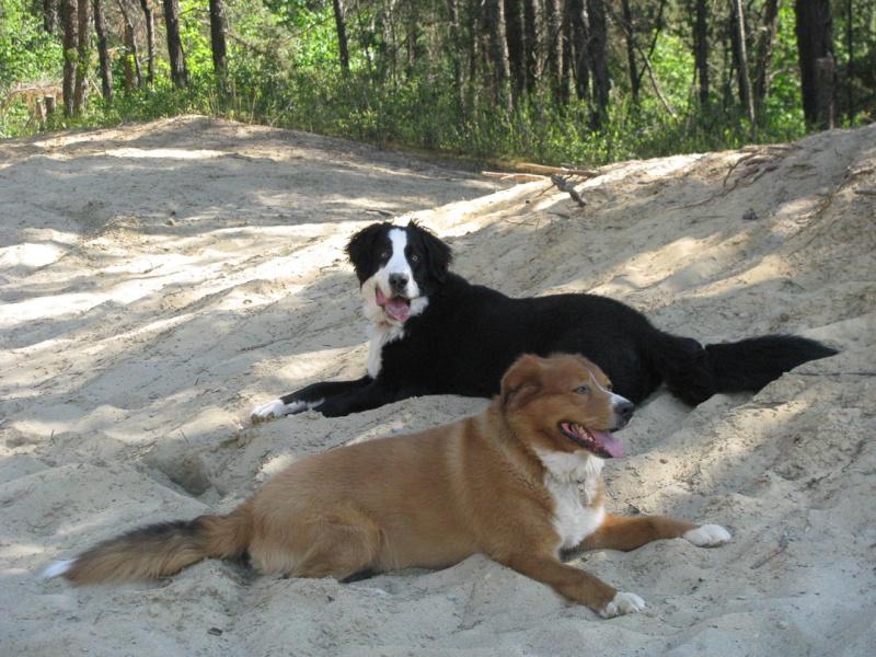 Pétition pour autoriser les chiens dans les SEPAQ (3 acceptés) Image12