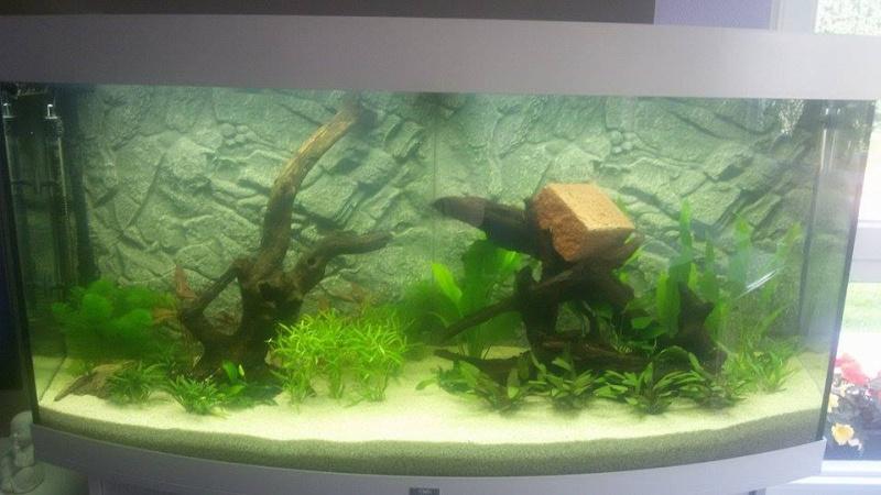 aquarium en préparation ;) + finale 12053112