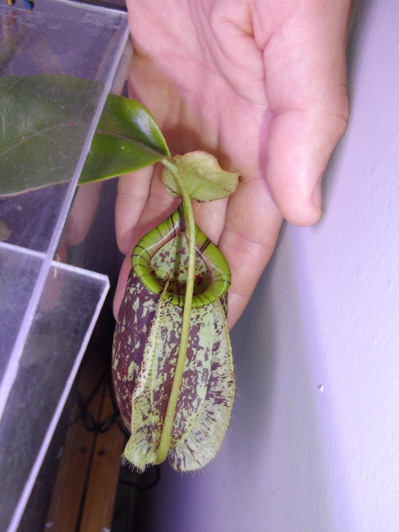 Bonjour, présentation de toutes mes plantes Imgp1210