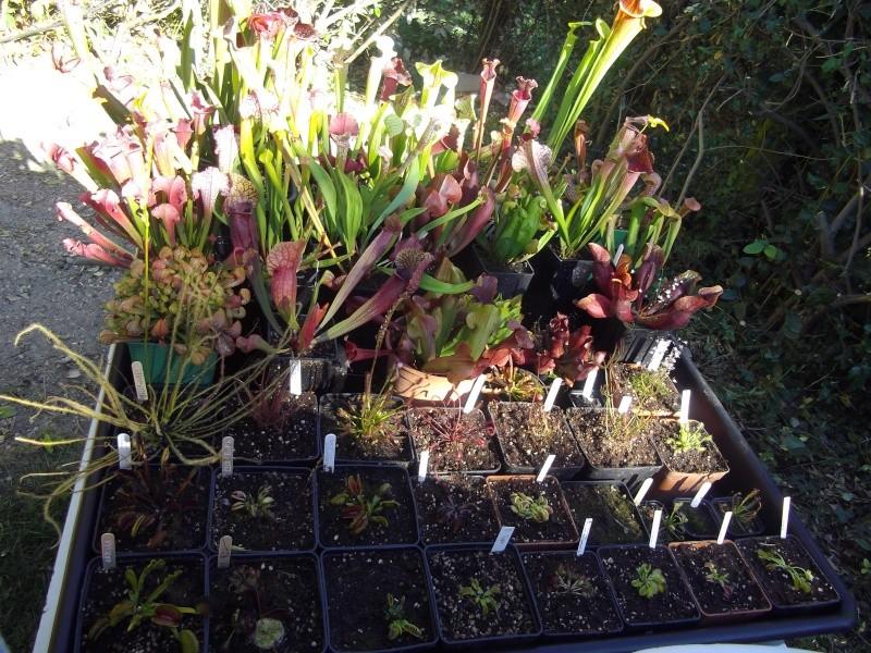 Bonjour, présentation de toutes mes plantes Imgp1510