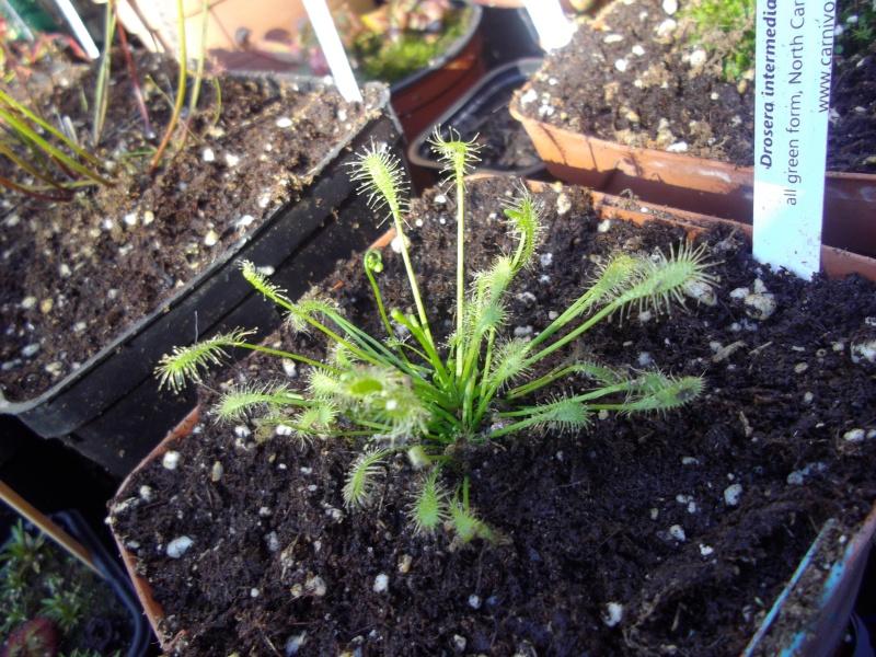 Bonjour, présentation de toutes mes plantes Imgp1515