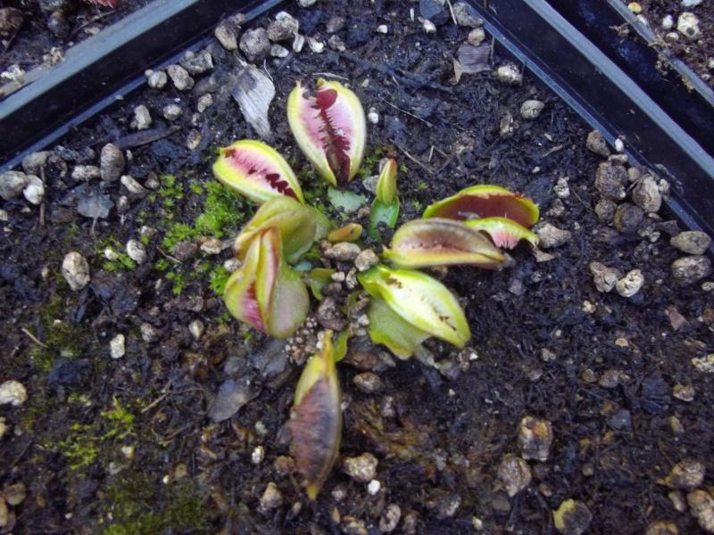 Bonjour, présentation de toutes mes plantes Imgp1516