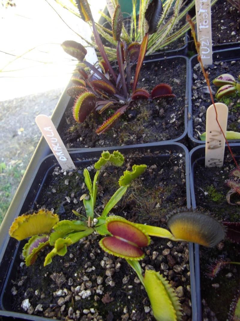 Bonjour, présentation de toutes mes plantes Imgp1517