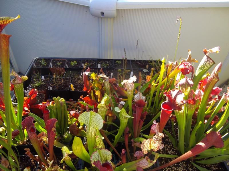 Bonjour, présentation de toutes mes plantes Imgp1518