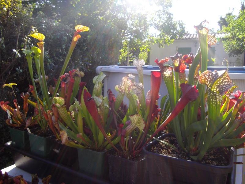 Bonjour, présentation de toutes mes plantes Imgp1519