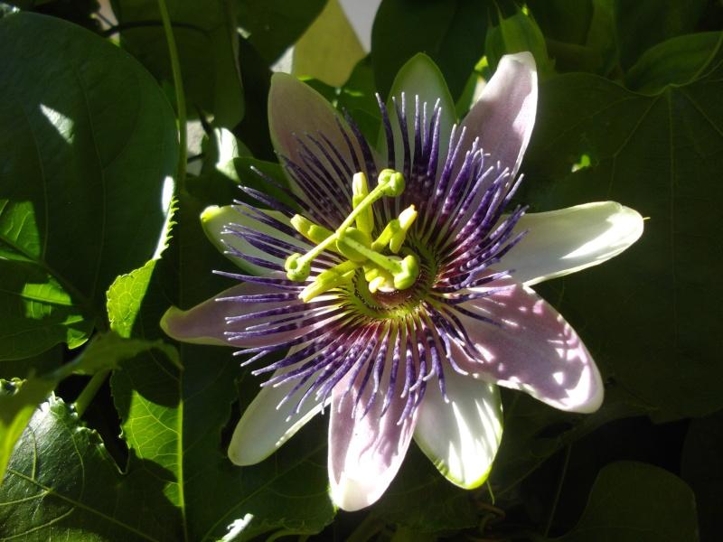 Bonjour, présentation de toutes mes plantes Imgp1522