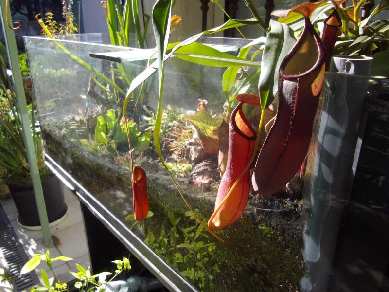 Bonjour, présentation de toutes mes plantes Imgp1525