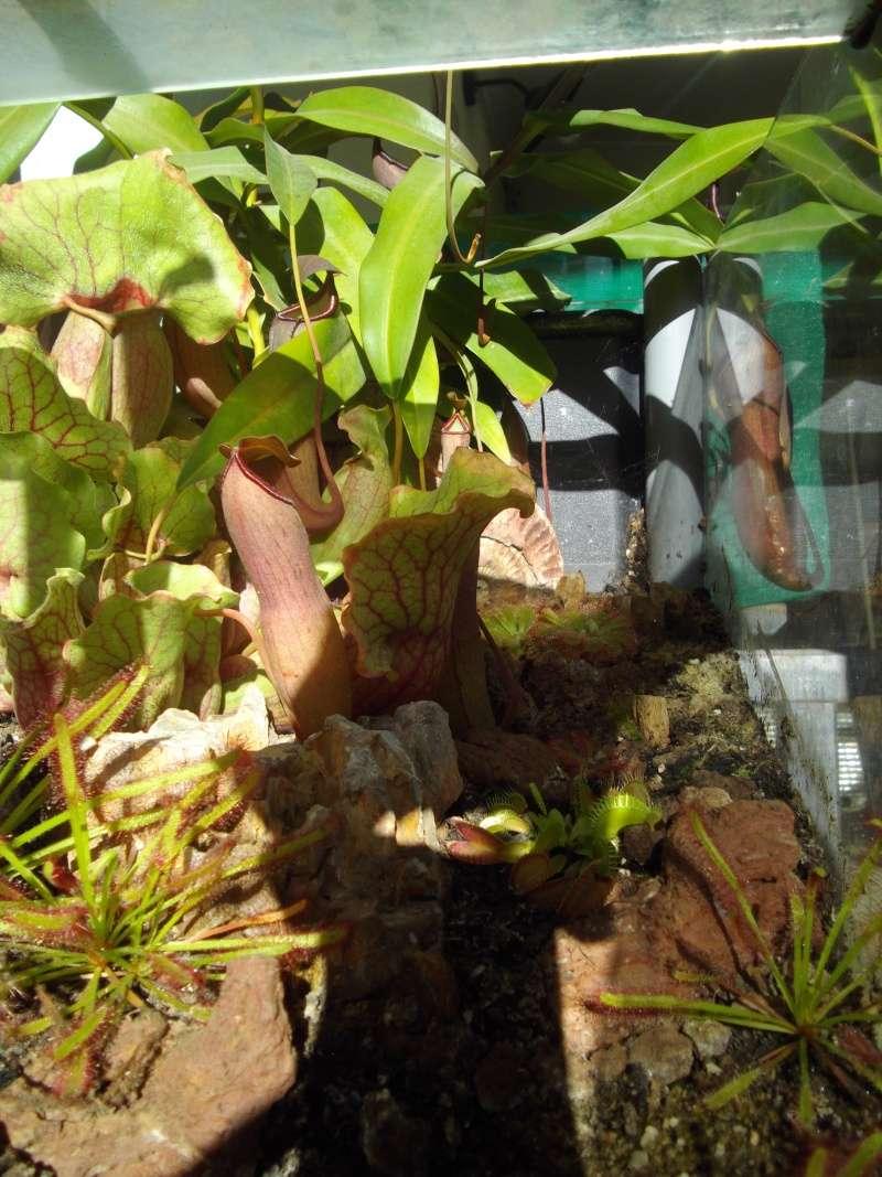 Bonjour, présentation de toutes mes plantes Imgp1610