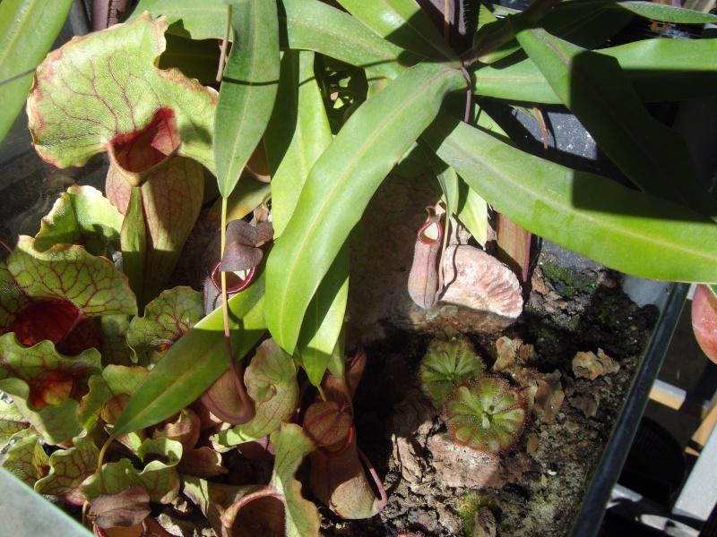 Bonjour, présentation de toutes mes plantes Imgp1611