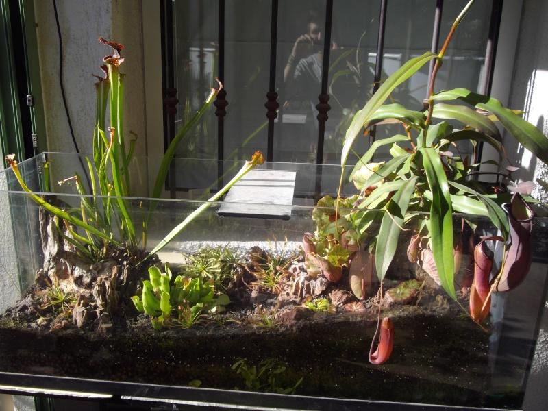 Bonjour, présentation de toutes mes plantes Imgp1612