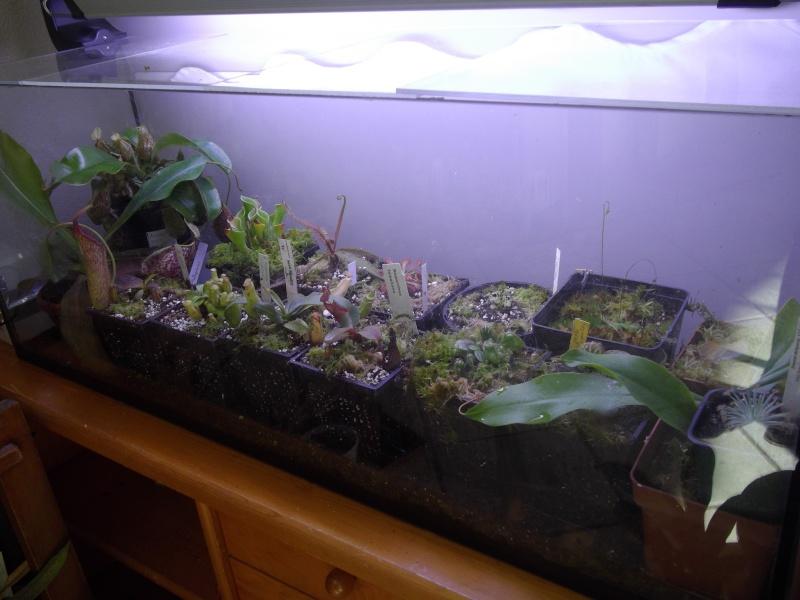 Bonjour, présentation de toutes mes plantes Imgp1618