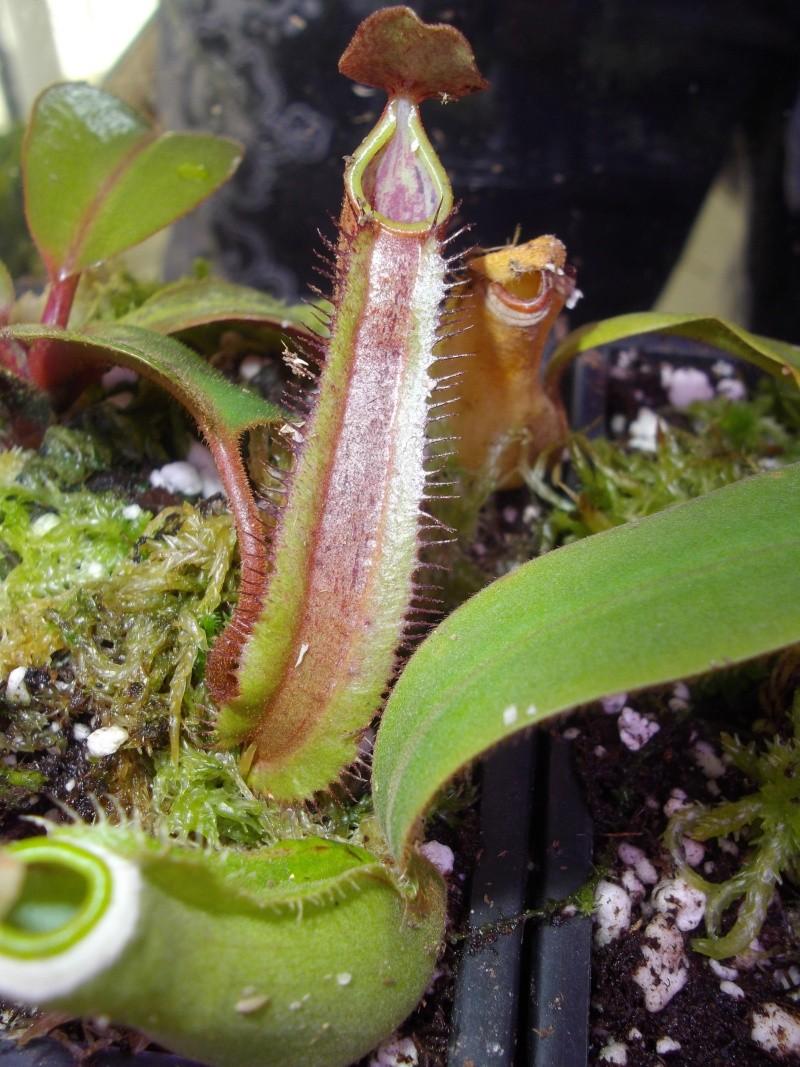 Bonjour, présentation de toutes mes plantes Imgp1622