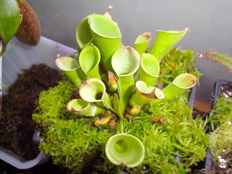 Bonjour, présentation de toutes mes plantes Imgp1624
