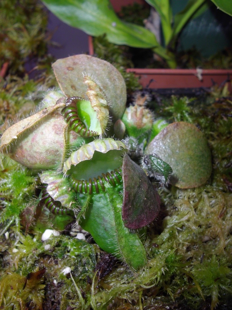Bonjour, présentation de toutes mes plantes Imgp1625