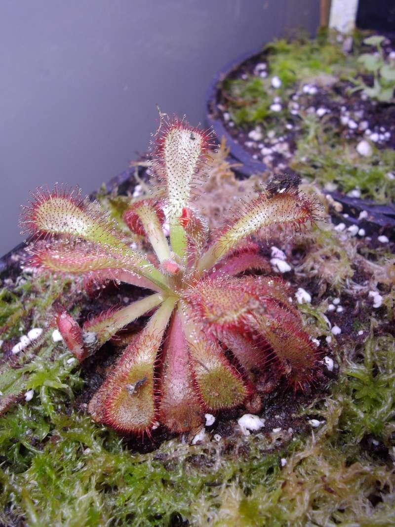 Bonjour, présentation de toutes mes plantes Imgp1627