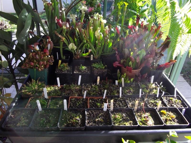Bonjour, présentation de toutes mes plantes Imgp1910