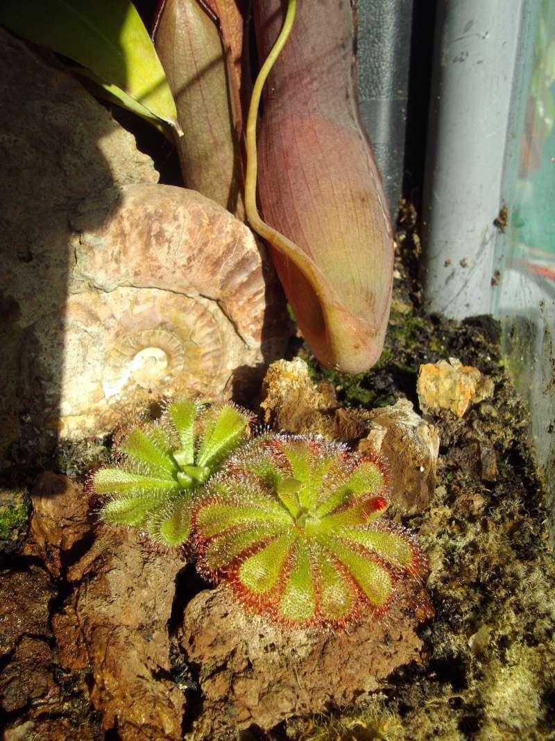 Bonjour, présentation de toutes mes plantes Imgp1911