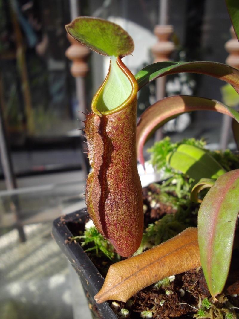 Bonjour, présentation de toutes mes plantes Imgp1913