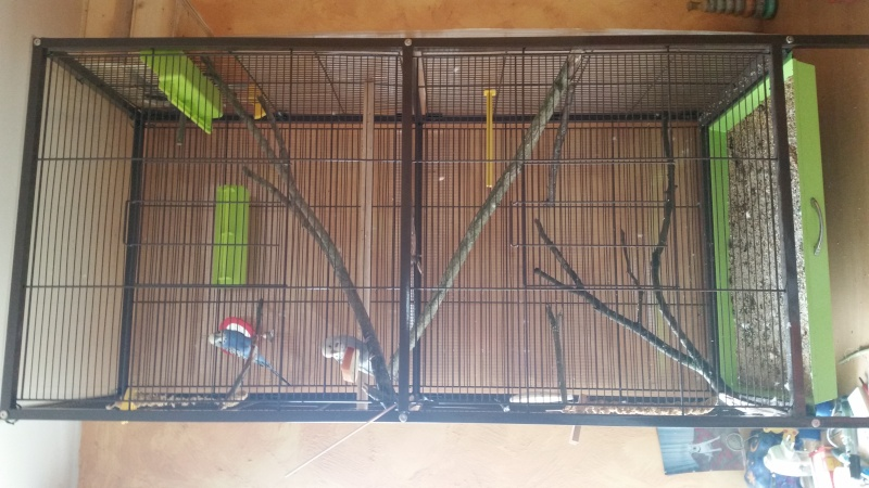 organisation de ma cage  20150913