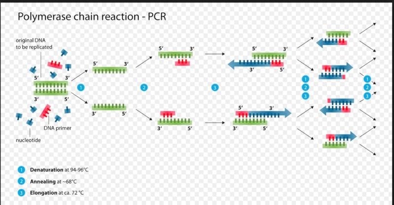 Quy trình chạy PCR Pcr10
