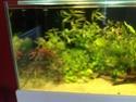 Aquarium 300l communautaire Img_0211