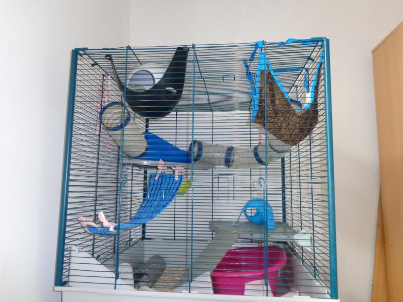 Choix de cage#help me please - Page 2 Dsc00712