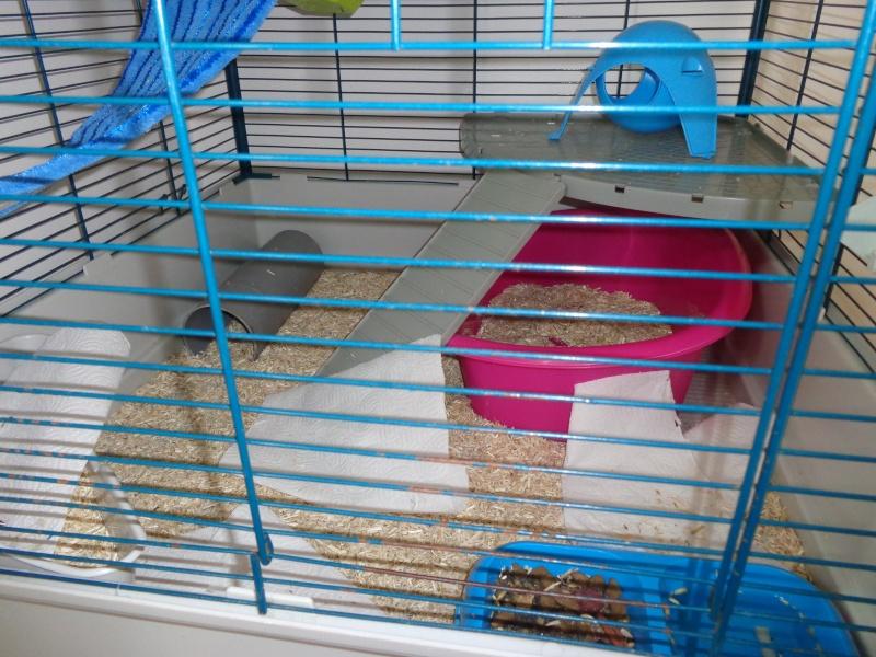 Choix de cage#help me please - Page 2 Dsc00713