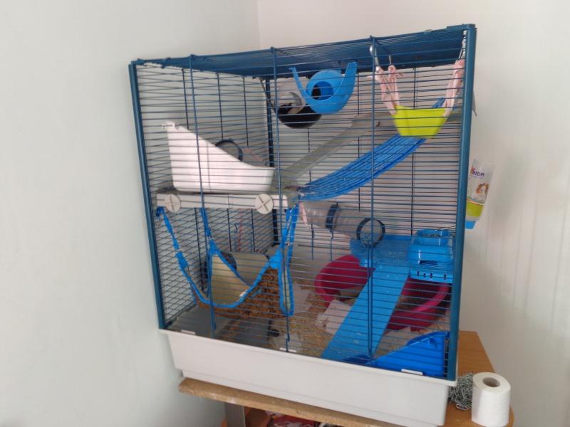 Choix de cage#help me please - Page 2 Dsc00910
