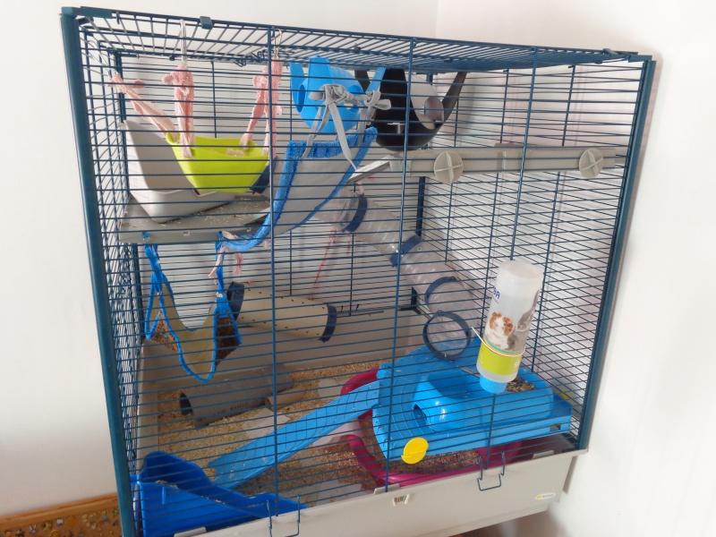 Choix de cage#help me please - Page 2 Dsc00911
