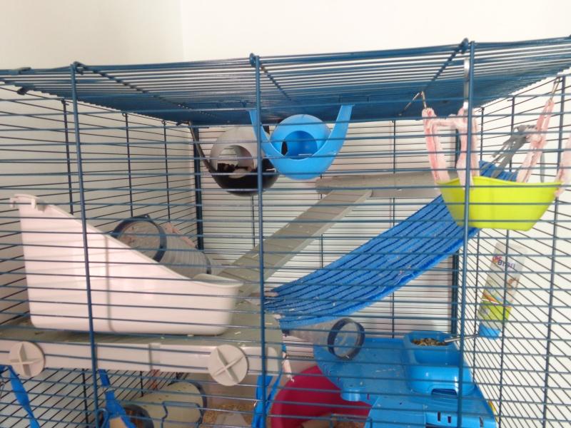 Choix de cage#help me please - Page 2 Dsc00912