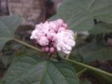 identification d'une plante El_fel14