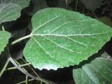 identification d'une plante El_fel15