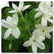 identification d'une plante El_fel16