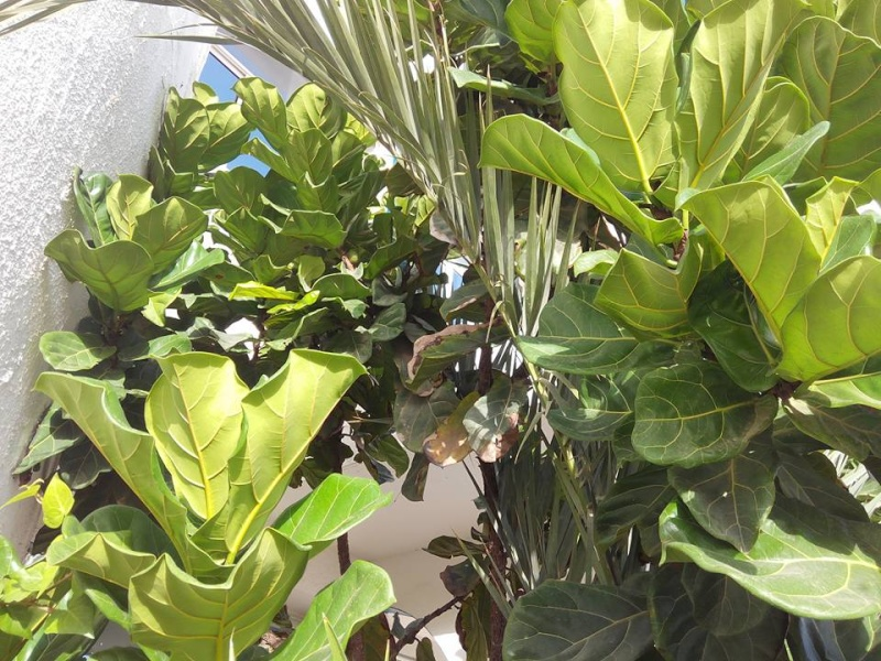 plante a identifier Figuie11