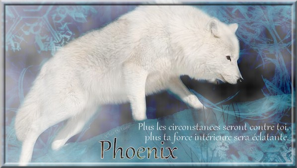 Présentation de Clair De Lune Phoeni10