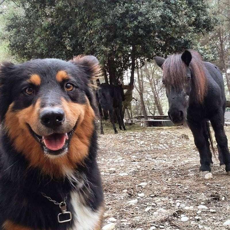 chien et chevaux ! 12067310
