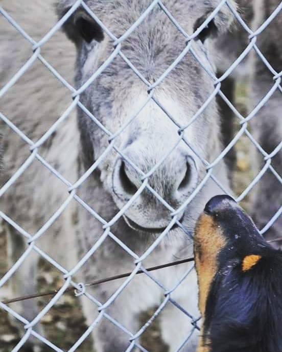 chien et chevaux ! 12067910