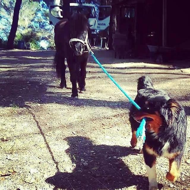 chien et chevaux ! 12077510