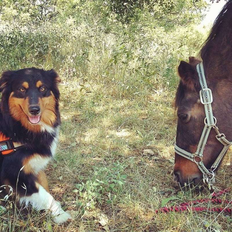 chien et chevaux ! 12086810