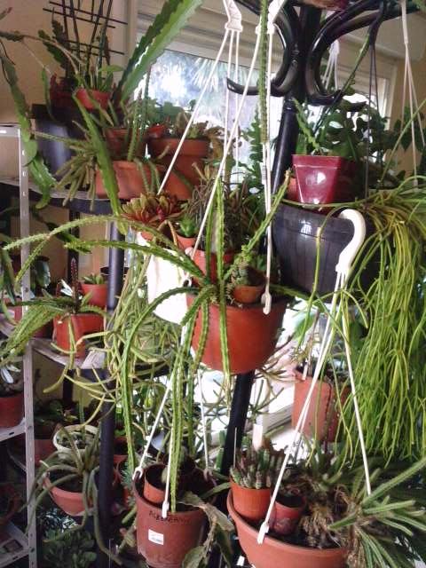 Mes plantes en hiver P1410117