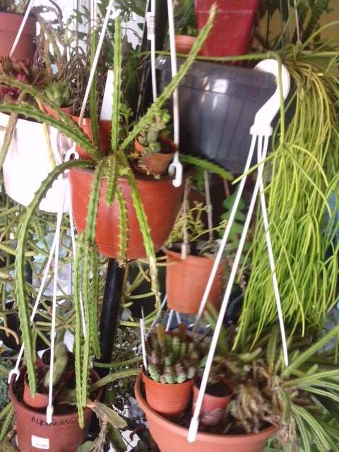 Mes plantes en hiver P1910111