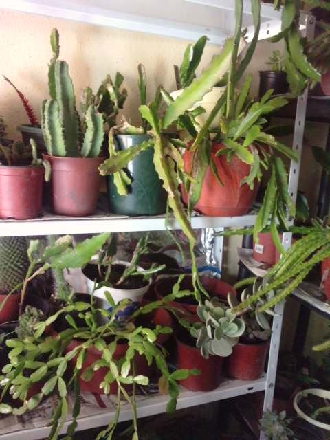 Mes plantes en hiver P1910112