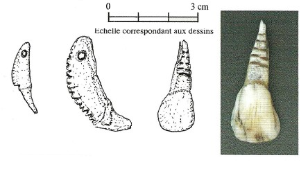 4.1.1. LES OBJETS NATURELS UTILISÉS EN PARURE. Dents-11