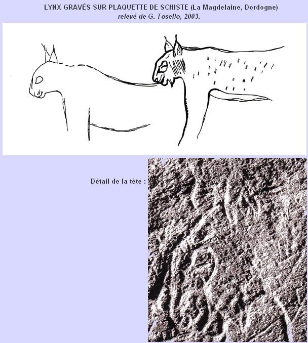 Les supports de l'expression artistique paléolithique. Lynx_s10